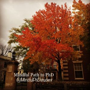 Fall tree harvard IG